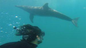 nadando-delfines