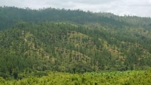 Bosque-en-el-Municipio-de-Jano-OlanchoFILEminimizer-1