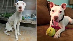 perritos-callejeros-rescatados