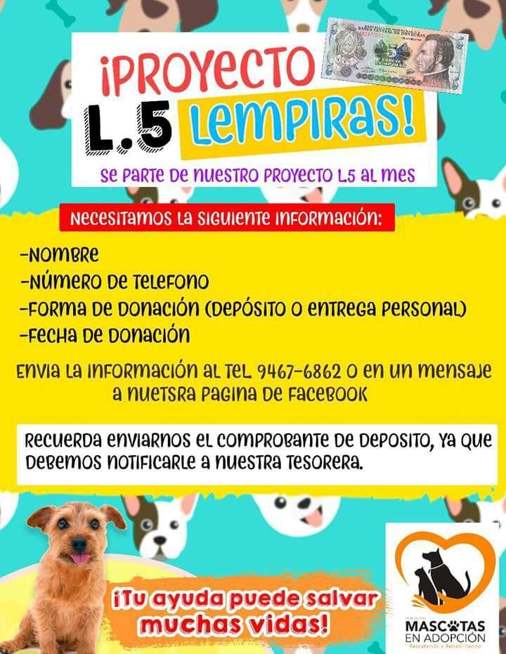 Fuente: Mascotas en Adopción Honduras