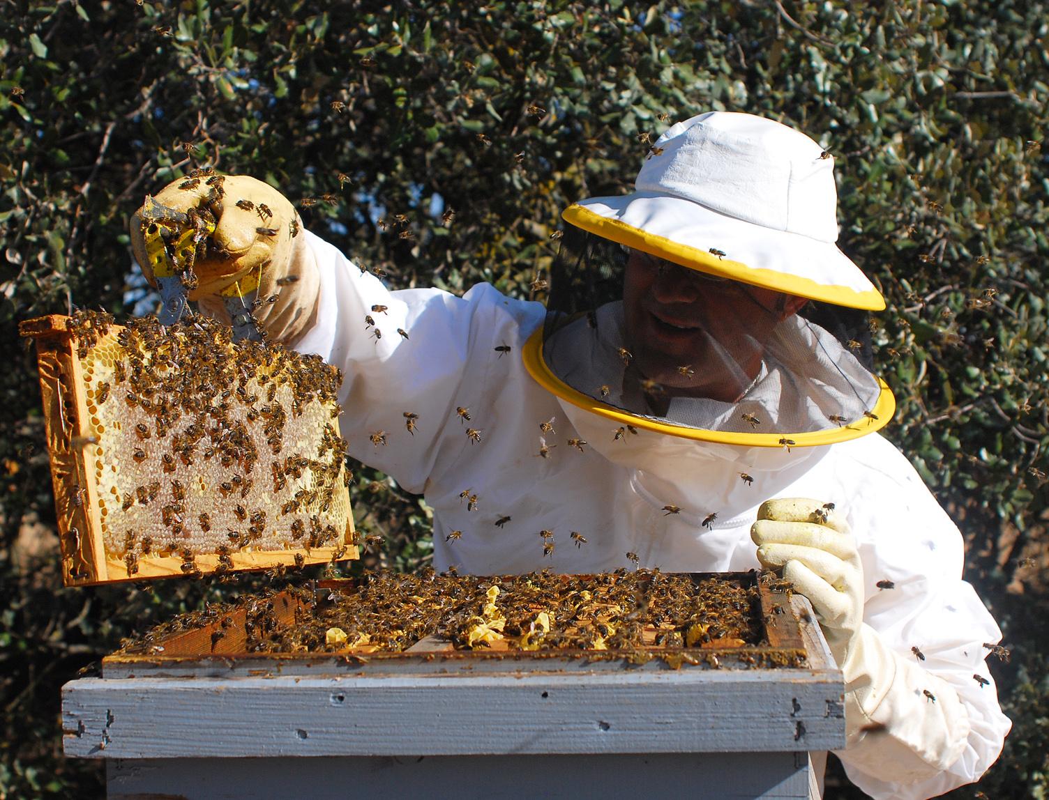 Fuente: Produccion de miel