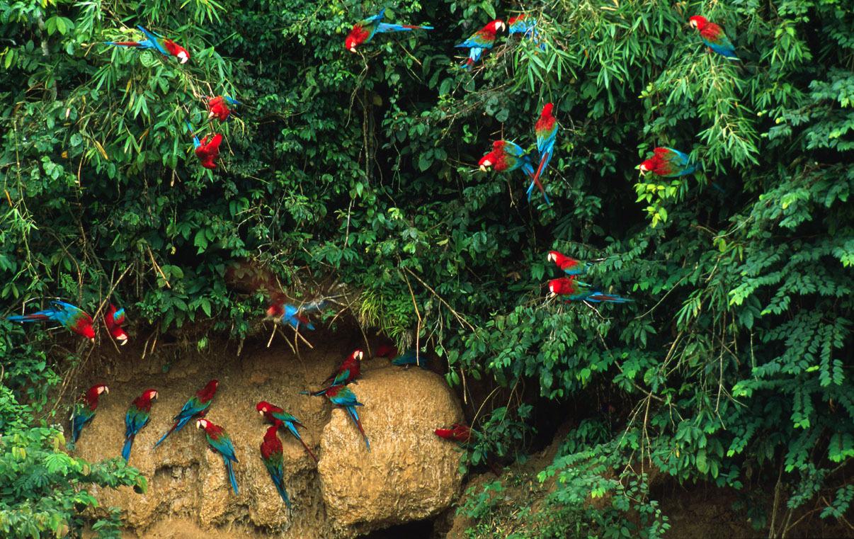 Fuente:WWF