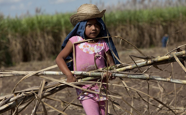 Rosaleni Tumpanillo, 7, carries sugar cane stalks in a field near the village of San Juan del Carmen, where she now lives. She helps her family plant sugar cane some afternoons. Rosaleni's family lived in a makeshift tarpaulin shelter in their previous village, which had no school and no transportation to the nearest schoolhouse in the eastern lowlands. Her siblings spent their days cutting cane and doing household chores. In San Juan del Carmen, children no longer have to work in the fields, although many help their parents plant cane or clear the fields to supplement the family income. [#9 IN SEQUENCE OF FIFTEEN] In June 2011 in Bolivia, legislative reforms and government efforts in health, education and other basic social services are improving the lives of children and families. Nevertheless, over half of the country's 10.4 million people – more than 40 per cent of whom are children – live in poverty, with 26 per cent living in extreme poverty. An estimated 310,000 children work, sometimes in dangerous conditions, to help support their families. Tens of thousands of children, some as young as six years old, have traditionally worked in the sugar cane harvest and in mining, the two harshest jobs in the country. Children working in the sugar cane harvest also frequently drop out of school. Over the past decade, however, the number of children working in the sugar cane harvest has dropped from 8,000 to less than 1,000 thanks to initiatives providing stable schools and basic infrastructure in communities. For example, the impoverished village of San Juan del Carmen in the eastern department of Santa Cruz, now has permanent schools and teachers. The village is surrounded by cane fields and has no electricity, but residents live in their own homes – instead of in temporary harvesting camps on the lands where they work. And its children attend school, as well as work part-time to help their families. Two of the village's four schoolhouses have been built with support f