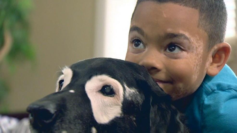 Niño sale de la depresión después de ver a un perrito con la misma  enfermedad - RadioHouse